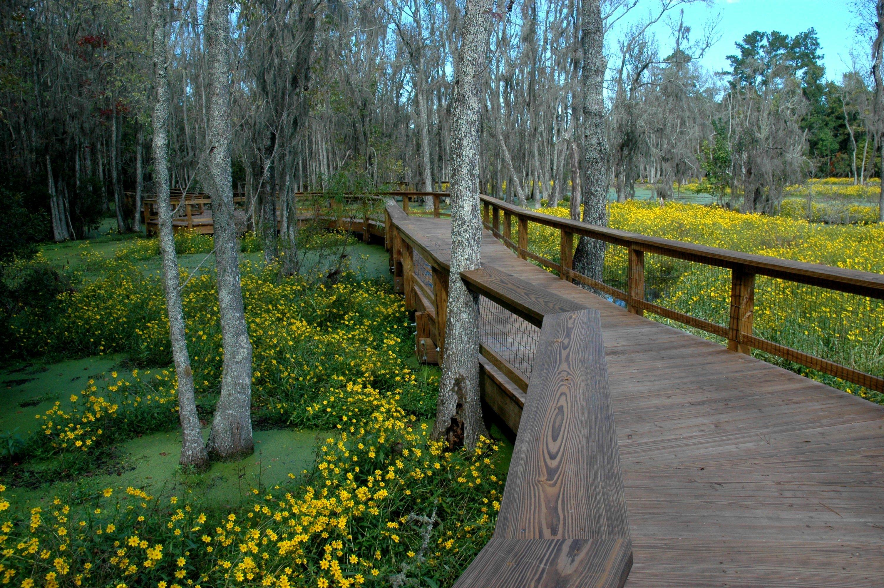 Magnolia Plantation & Gardens image 2