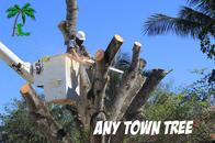 Any Town Tree - Professional Tree Removal Company in Naples, FL