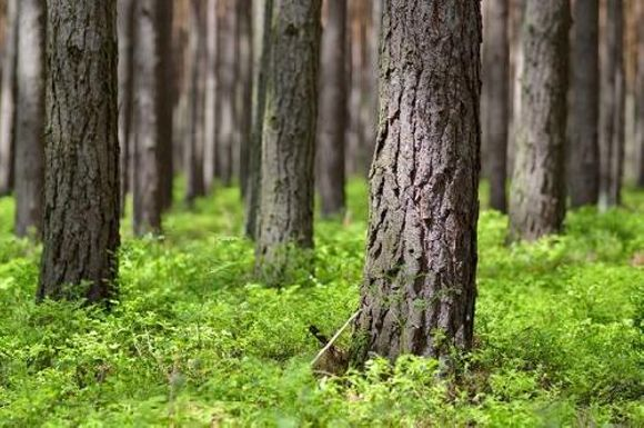 Skogsvårdsföreningen Österbotten Kållby