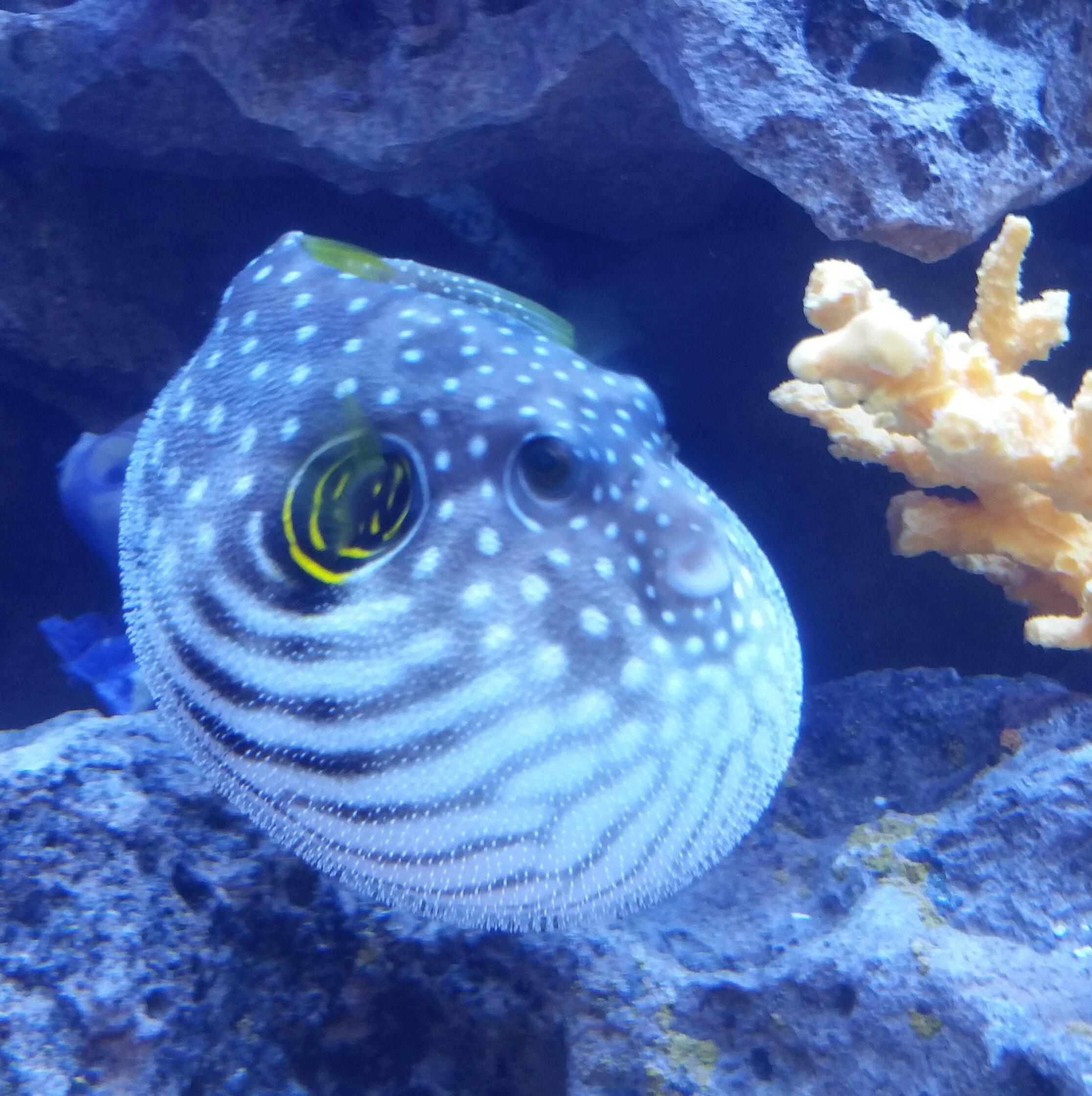Premier Aquarium Service Coupons Near Me In Minneapolis