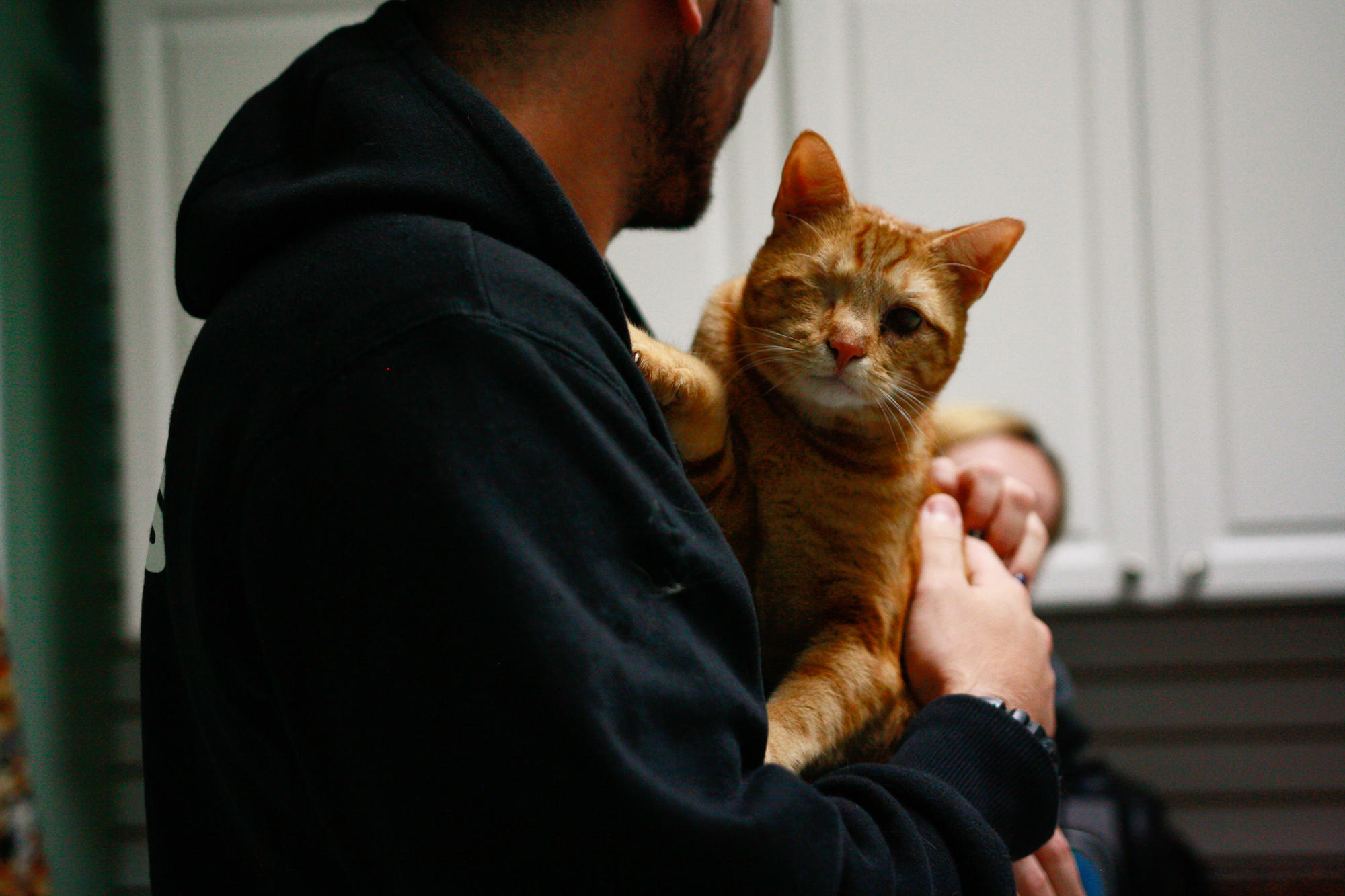 Farmingdale Dog And Cat Clinic