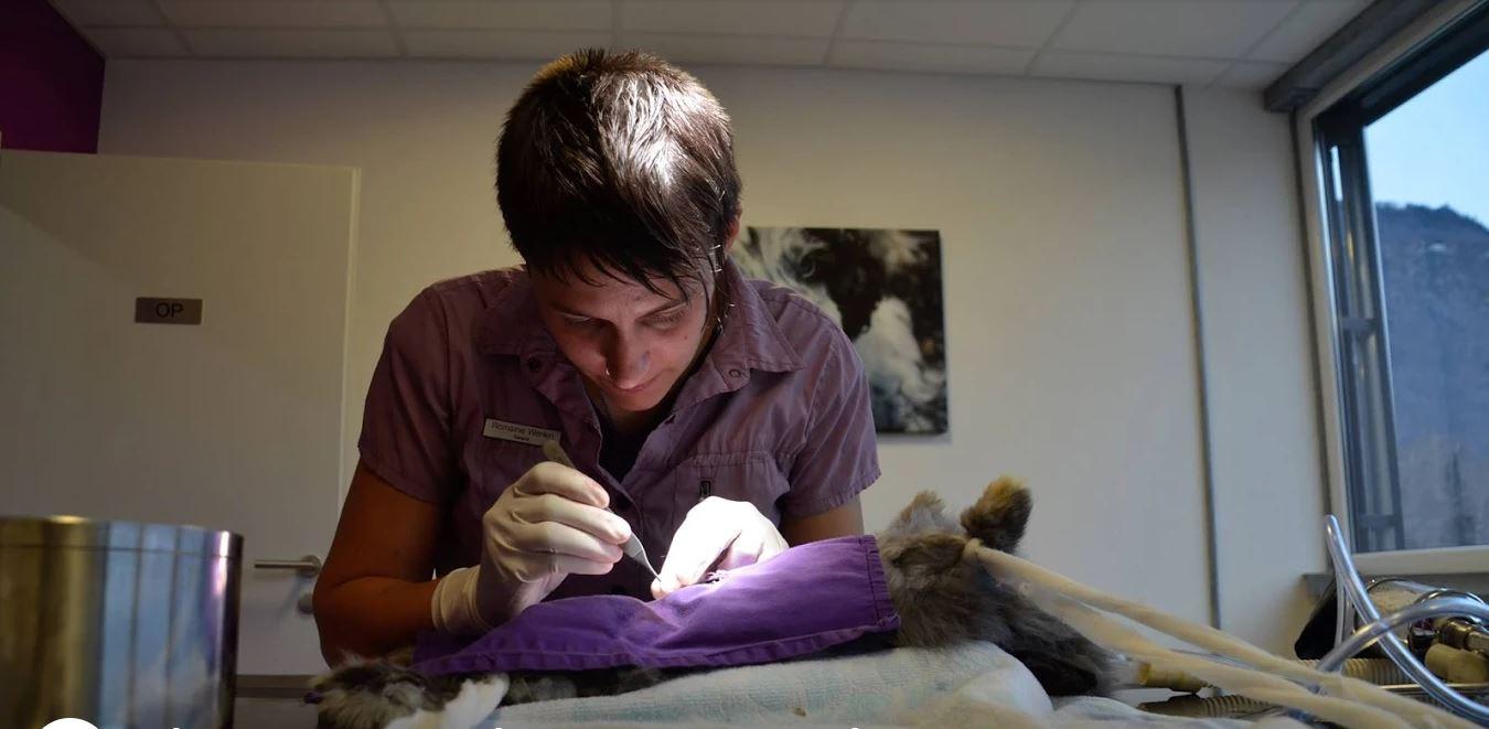 Kleintierpraxis Werlen Romaine
