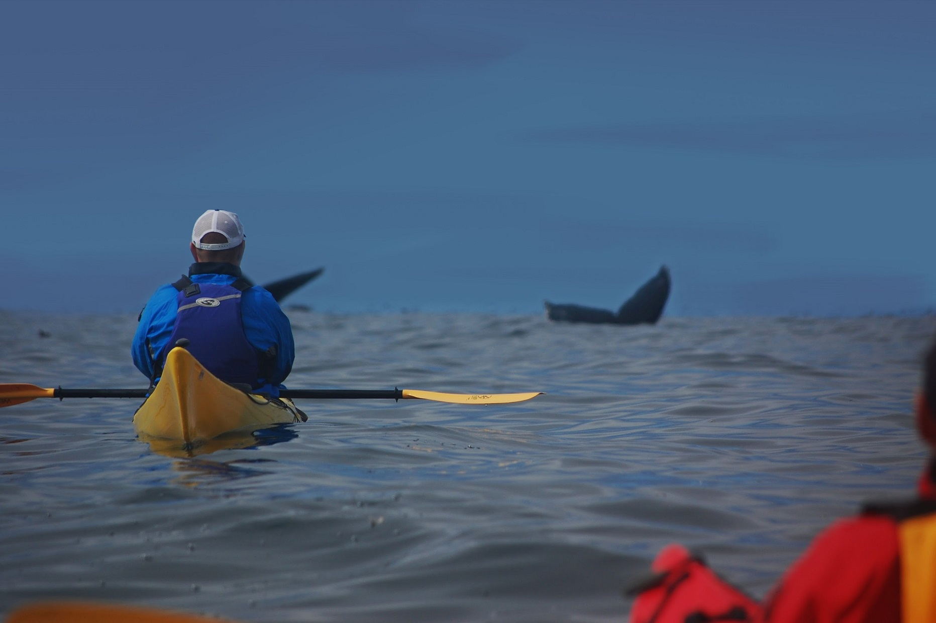 Sold Out - Kayak Whale Tour of Monterey Bay