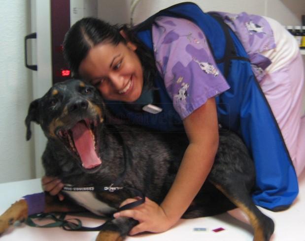 G-N Veterinary Clinic
