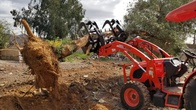 Tree and Tree Stump Removal in Phoenix Scottsdale Peoria Surprise AZ