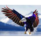 American Legion Post 325 Ellenton - Ellenton, FL 34222 - (941)981-3819 | ShowMeLocal.com