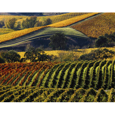 Wine Country Photography