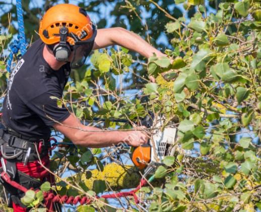 Cavan Tree Services
