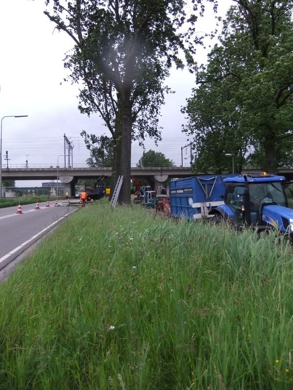 Boomrooierij Van Zwienen/ Klompenfabriek