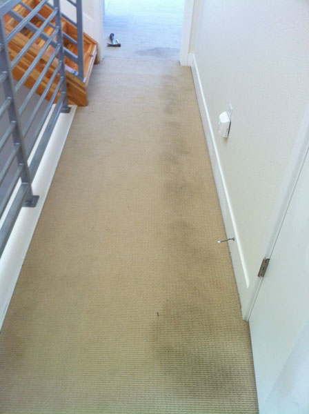 NYC Carpet Cleaning image 4