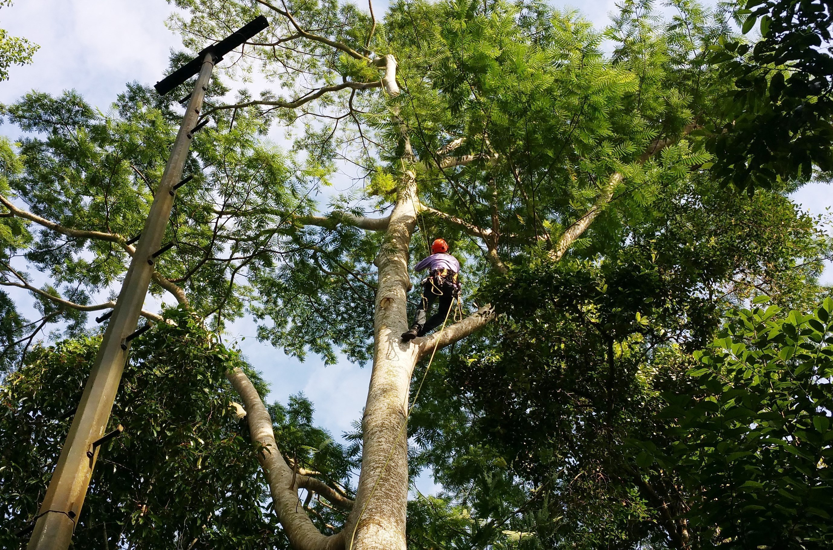 Aguilar Tree Service