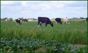 Kaas en IJsboerderij Cornelis Hoeve