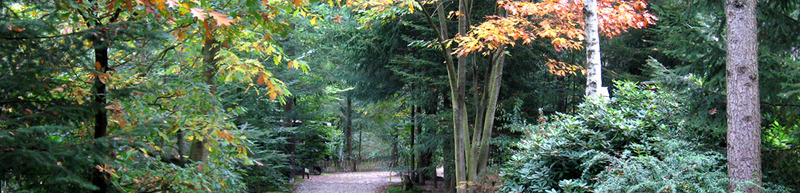 Bungalowpark De Toverberg