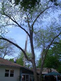 Samuel's Tree Service