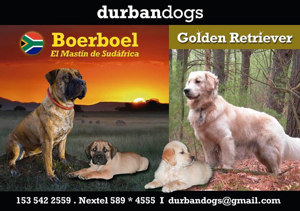 DURBAN DOGS