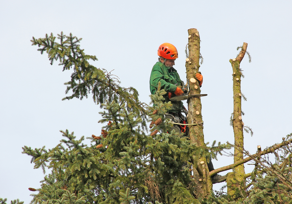 Instacare Tree Service - Kirkwood, MO 63122 - (314)575-4328 | ShowMeLocal.com