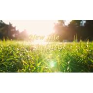 New Life in Christ - Warrenton, VA 20186 - (540)321-8626 | ShowMeLocal.com
