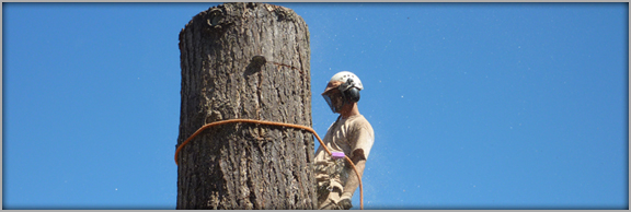 A-1 Tree Service Eastside - Woodinville, WA - Tree Service, Tree Trimming, Height Reduction, Tree Removal, Professional Arborists