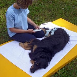 Praxis für Kleintiere und Tierphysiotherapie Elma Strauch
