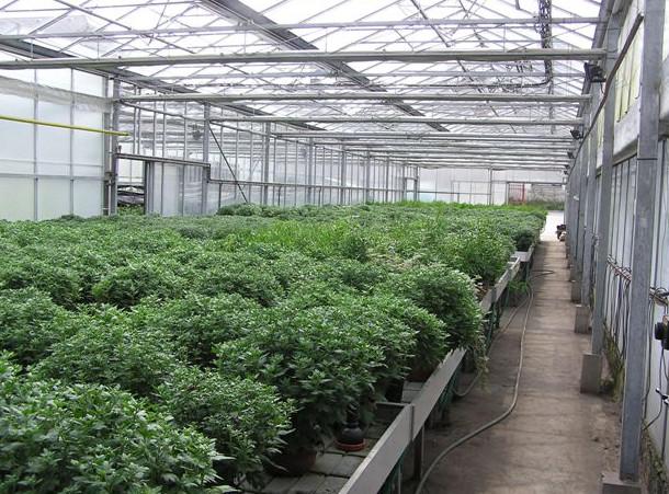 Zahradnictví Škoda