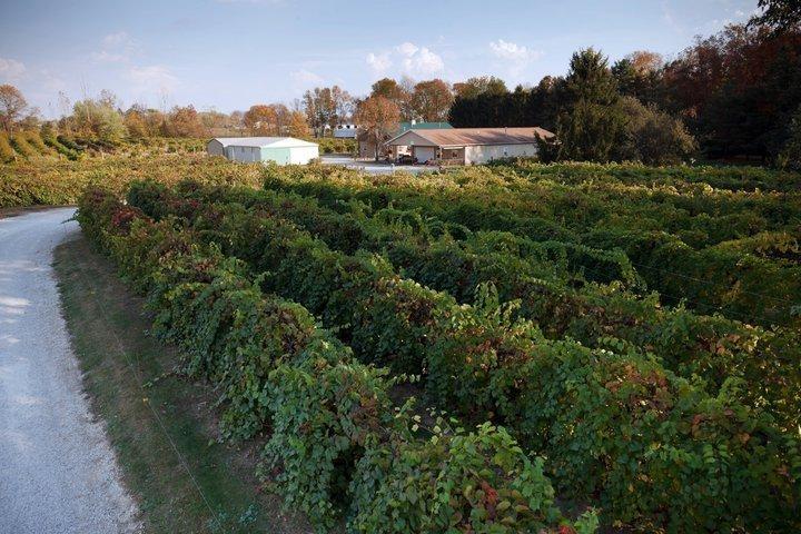 Slate Run Vineyard Winery
