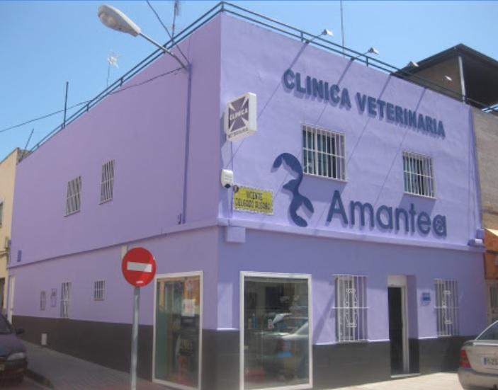 Clínica Veterinaria Amantea Badajoz