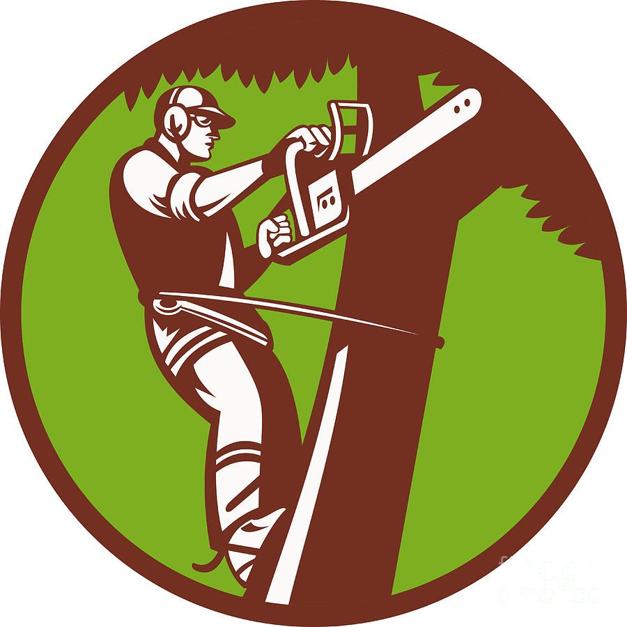 whitford's tree care