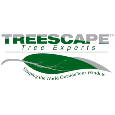 Treescape Tree Experts Charlotte