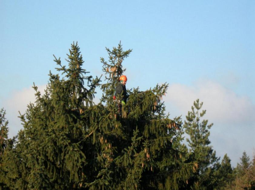Daniel Dolenský - výškové práce, arboristika