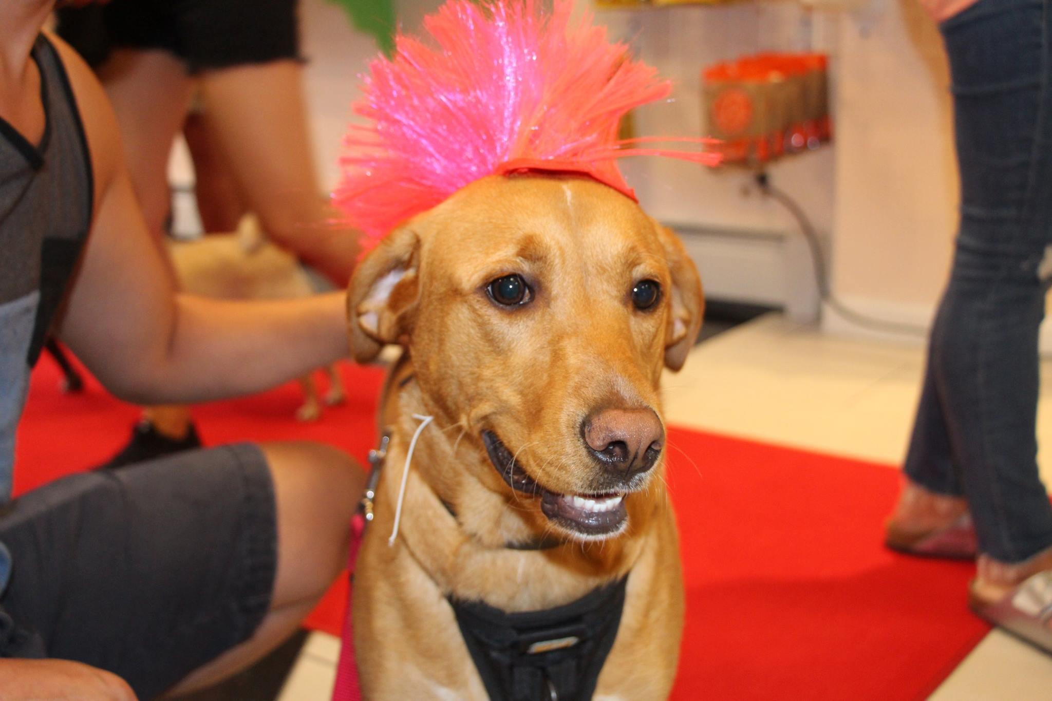 Long Island Dog Training Reviews