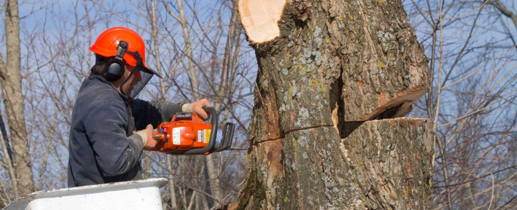Tip Top Timber