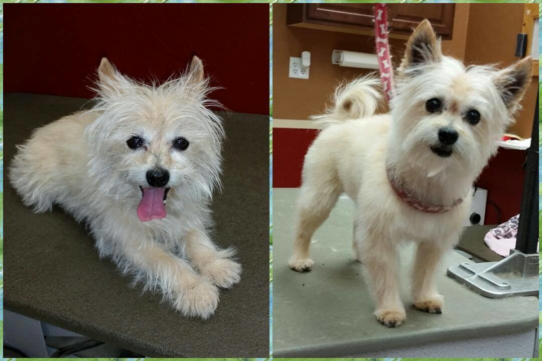 Dog Grooming Services In Scottsdale