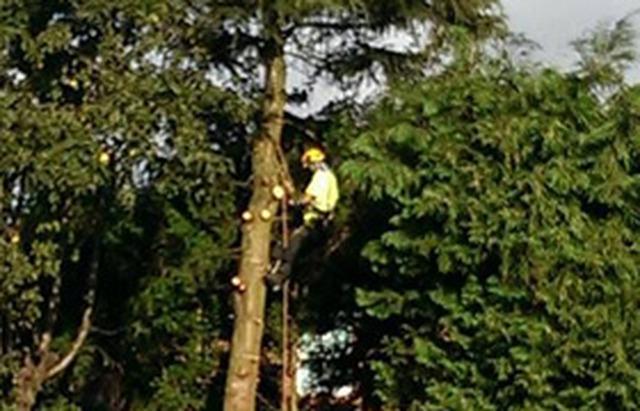 DBL Tree Care - Pontefract, West Yorkshire WF7 7BT - 01977 613689   ShowMeLocal.com