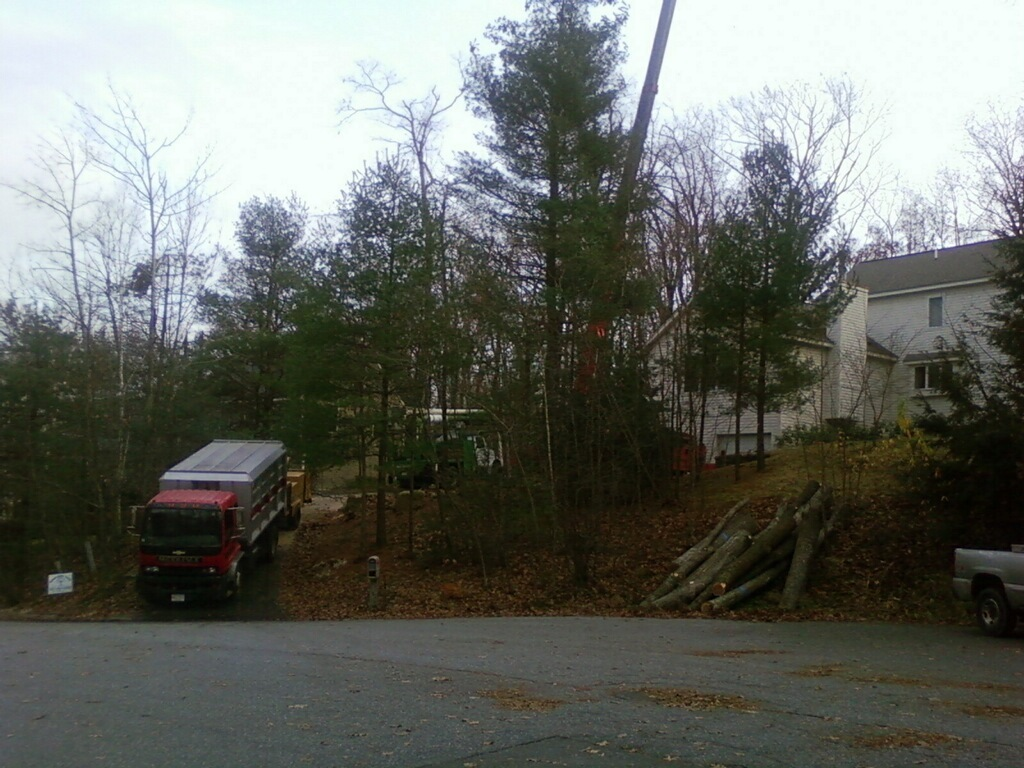 Middlesex Tree Service - Woburn, MA