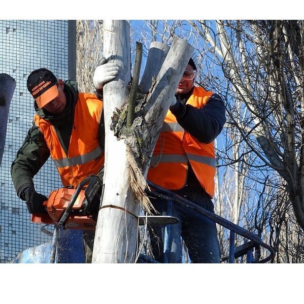 G&S Tree Service