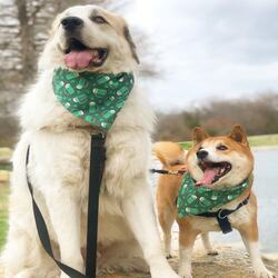 Uptown Pup Dallas