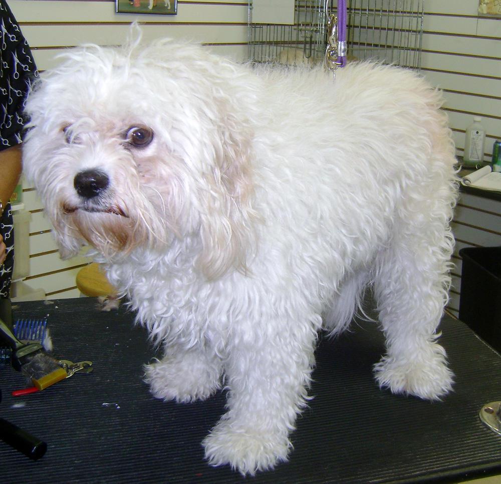 Top Dog Pets Sarasota