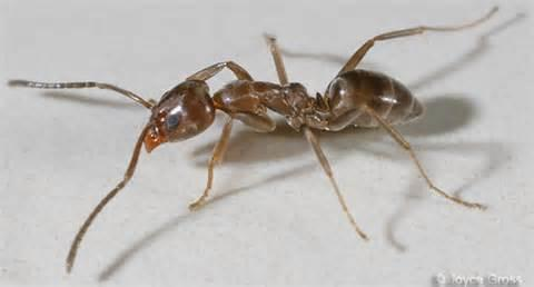 New World Pest Control