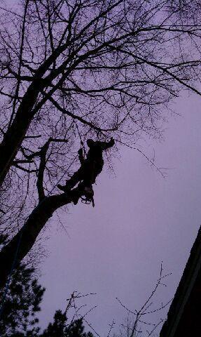 Jaguar Tree Service