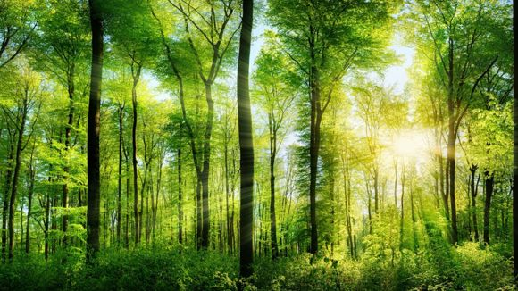 Metsänhoitoyhdistys Salometsä