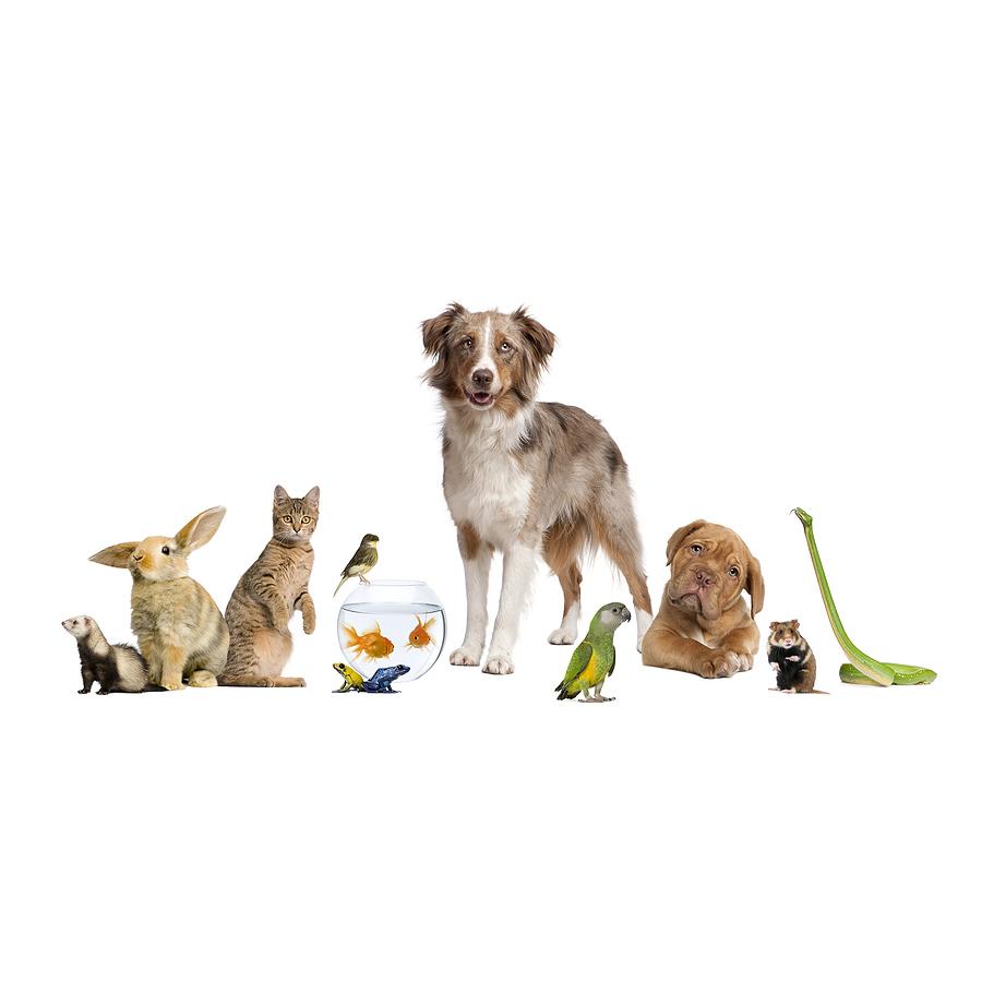 Cottage Pet Hospital - Anaheim, CA 92805 - (714)912-6951 | ShowMeLocal.com
