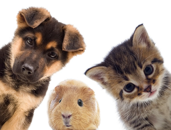pets2
