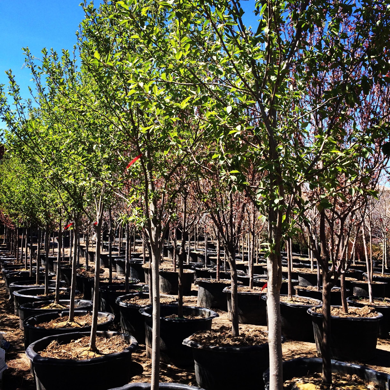 nick s garden center aurora colorado nick 39 s garden center farm market in aurora co 80014
