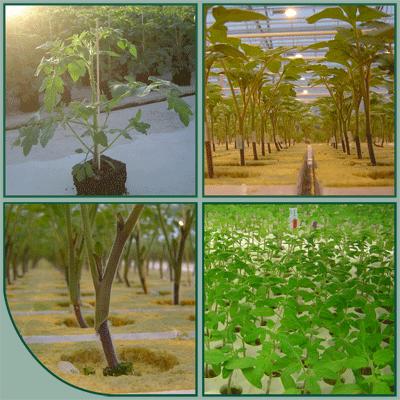 Globe Plant BV