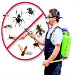 MW Legacy Pest Control