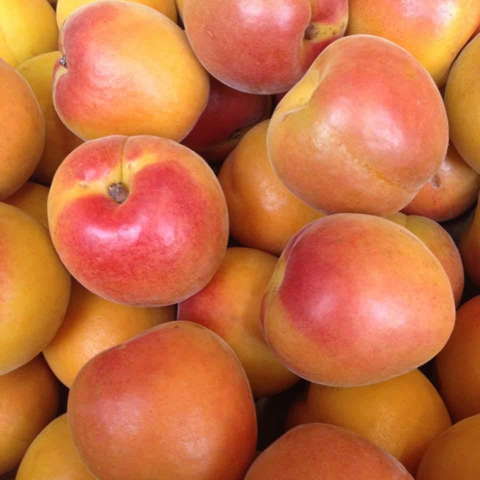 Dapol - Hurtownia Warzyw i Owoców - Bronisze