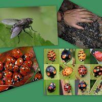 BDL/Bestra Oplossing voor overlast door diersoorten