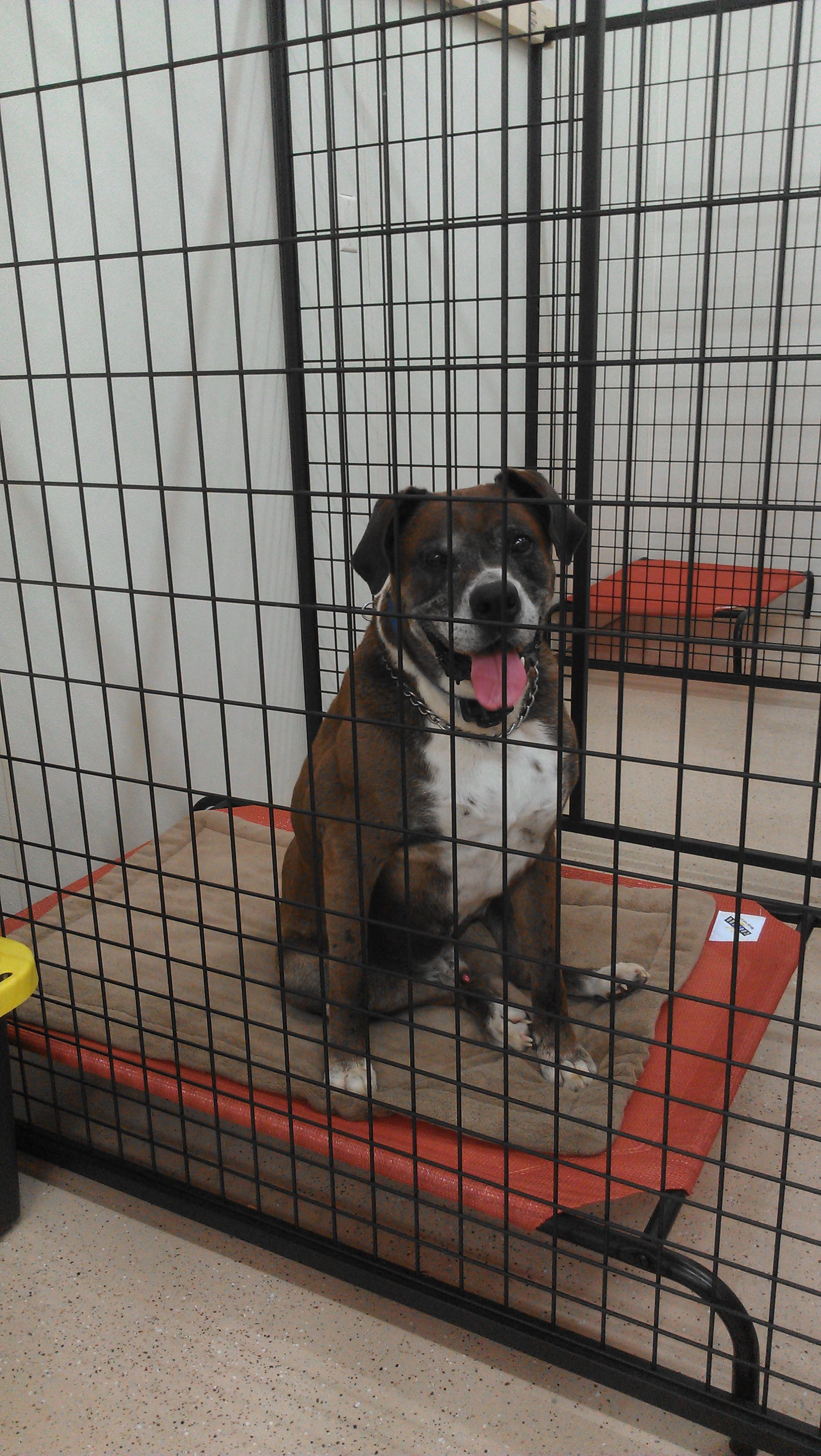 Dog Grooming In Marengo Ohio