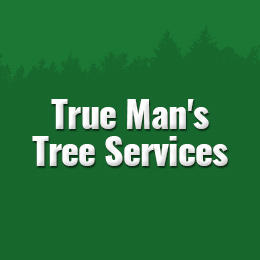 Tree Service in MI Morley 49336 True Man's Tree Services 16518 5 Mile Rd  (231)250-7104