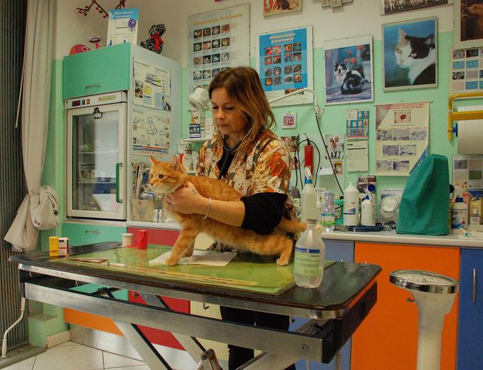 Ambulatorio Veterinario Dr.ssa Baraldi Simona